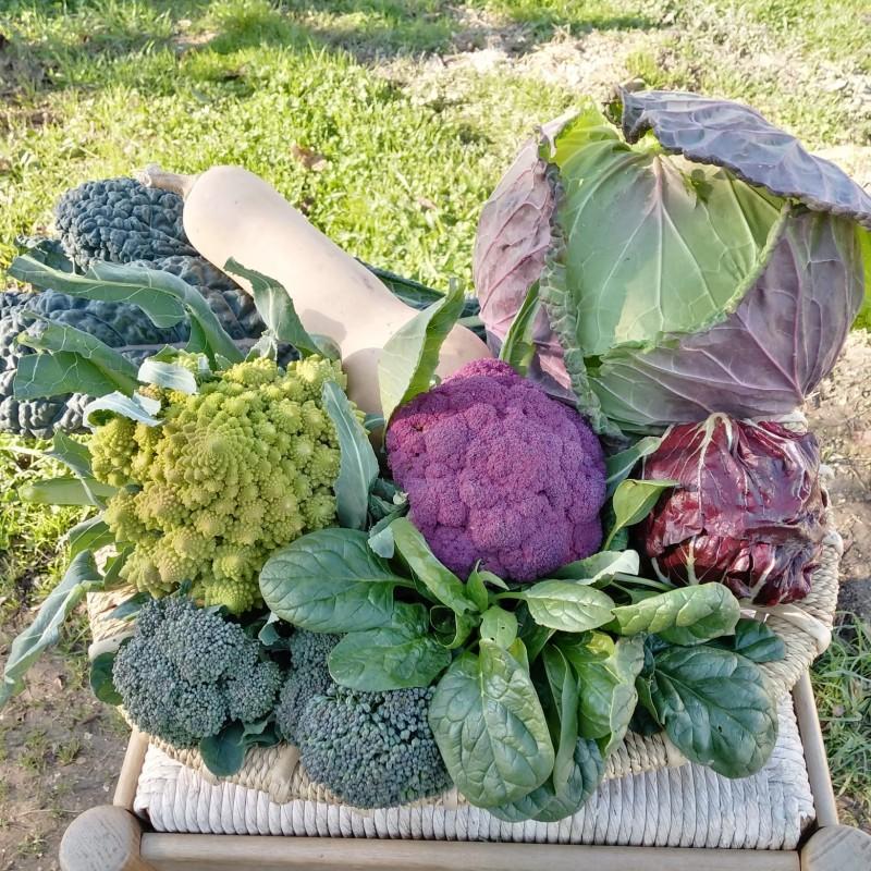 cassetta-di-verdure-mista-4-kg